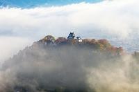 福井県 越前大野城