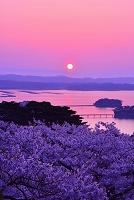 宮城県 朝日と桜
