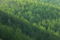 森林の新緑