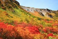 北海道 上川町 大雪高原 紅葉