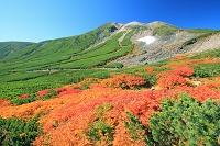 長野県 秋の乗鞍岳 紅葉とハイマツ