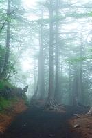 山梨県 霧に霞む樹林