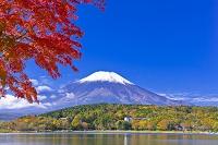 山梨県 富士山と山中湖の紅葉