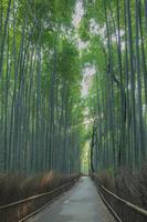 京都府 嵯峨野 竹林の道