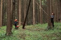 千葉県 袖ヶ浦市 植林地 間伐作業