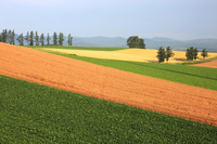 北海道 西日のパッチワーク畑