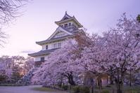 滋賀県 長浜市 長浜城 夜桜