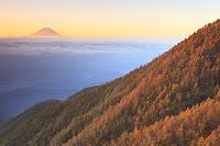 山梨県 富士川町 櫛形林道 朝焼けの富士山と雲海と黄葉の山並み