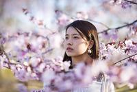 桜の前に佇む若い女性
