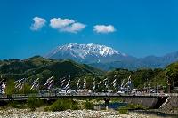 鳥取県 江府町 鯉のぼりと伯耆大山