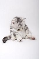 座ってうつむく猫