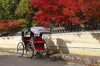 京都 嵯峨野 人力車