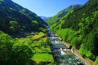 徳島県 祖谷川の堰と魚道
