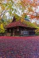 奈良県 紅葉の奈良公園 水谷茶屋