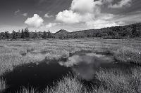 北海道 夏雲の高層湿原