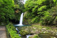 静岡県 新緑の浄蓮の滝