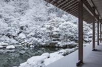 滋賀県 雪の百済寺庭園