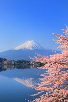 山梨県 富士山と河口湖畔の桜