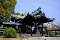 奈良県 柳沢神社 本殿とサクラ