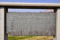 愛知県 国営木曽三川公園 木曽川堤櫻の案内板
