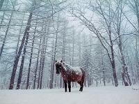 雪の中の馬