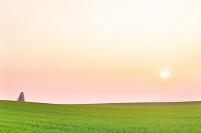 北海道 一本の木のある丘の夜明け
