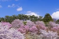 福島県 亀ヶ城公園