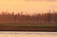 北海道 春国岱の夕日と丹頂鶴