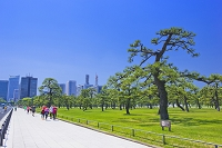 東京都 皇居外苑とジョギングをする人々