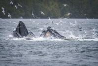 カモメの群れとクジラ