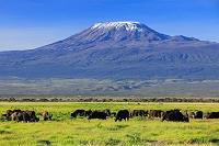 ケニア アフリカ 水牛とキリマンジャロ