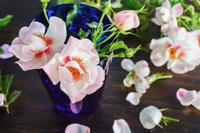 バラの花 エリドゥバビロン