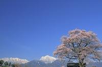 山梨県 桜と甲斐駒ケ岳中央とアサヨ峰
