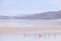ボリビア ウユニ塩湖とフラミンゴ