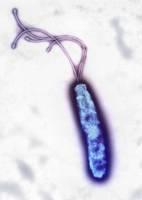 ヘリコパクター・ピロリ ピロリ菌