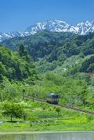 長野県 北アルプスと電車と水田