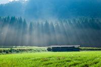 鳥取県 朝霧の光と稲架小屋