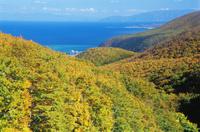 北海道 奥尻島 勝澗岬の紅葉
