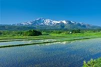 秋田県 鳥海山と水田