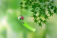 新緑のモミジと風鈴