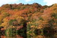 青森県 白神山地