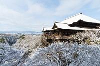 京都府 雪の清水寺本堂