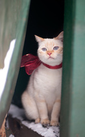 ドアの隙間から見つめる猫