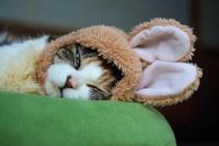 被り物をした猫