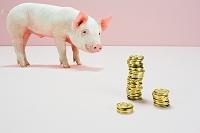 硬貨を見つめる子豚