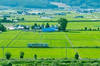 北海道 田畑の間を進む富良野線