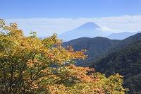 山梨県 丸山林道 富士山と紅葉