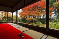 京都府 宝泉院 客殿から見る紅葉の額縁庭園