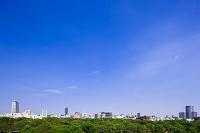 大阪府 大阪城公園
