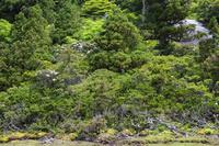 鹿児島県 花之江河 高層湿原と原生林 屋久島